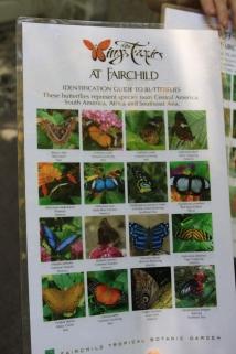 Folheto explicativo sobre as espécies de borboletas existentes no borboletário....