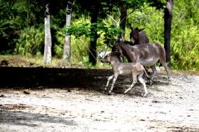 Zoo de Miami...